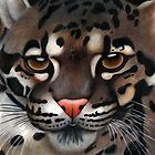Animalia: Clouded Leopard by NoelleMBrooks