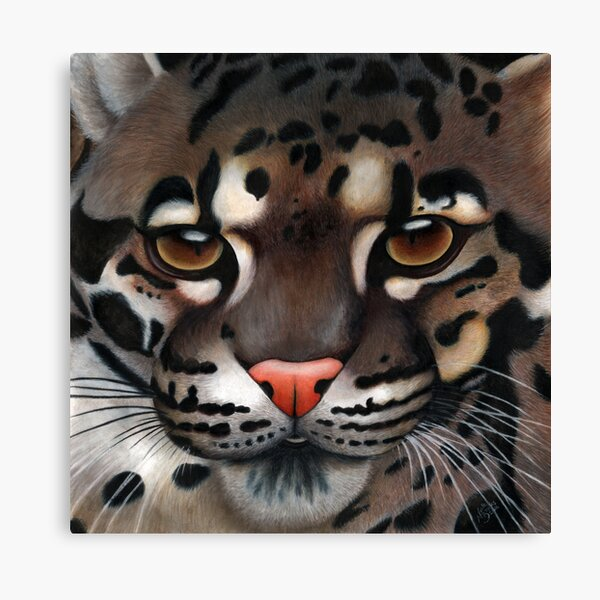 Animalia: Clouded Leopard Canvas Print