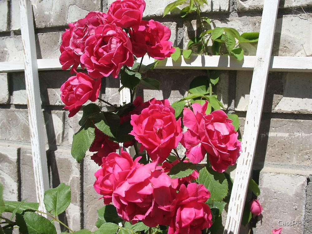 Mom's Flowers by CassPics