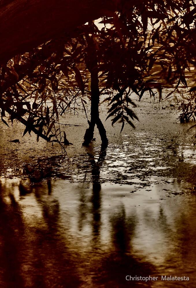 Rocky Narrows by Christopher  Malatesta