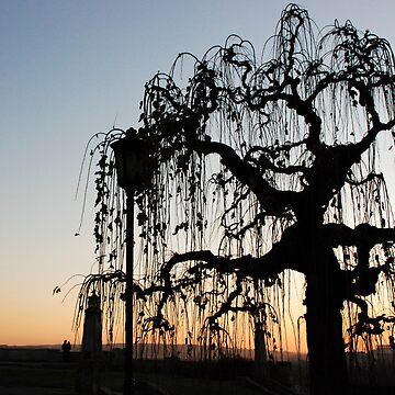 Sunset tree by AleFairyland