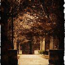 Esplanade walkway into night by Owed To Nature