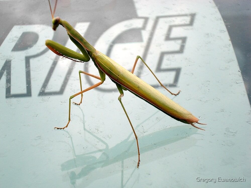 Preying Mantis by Gregory Ewanowich