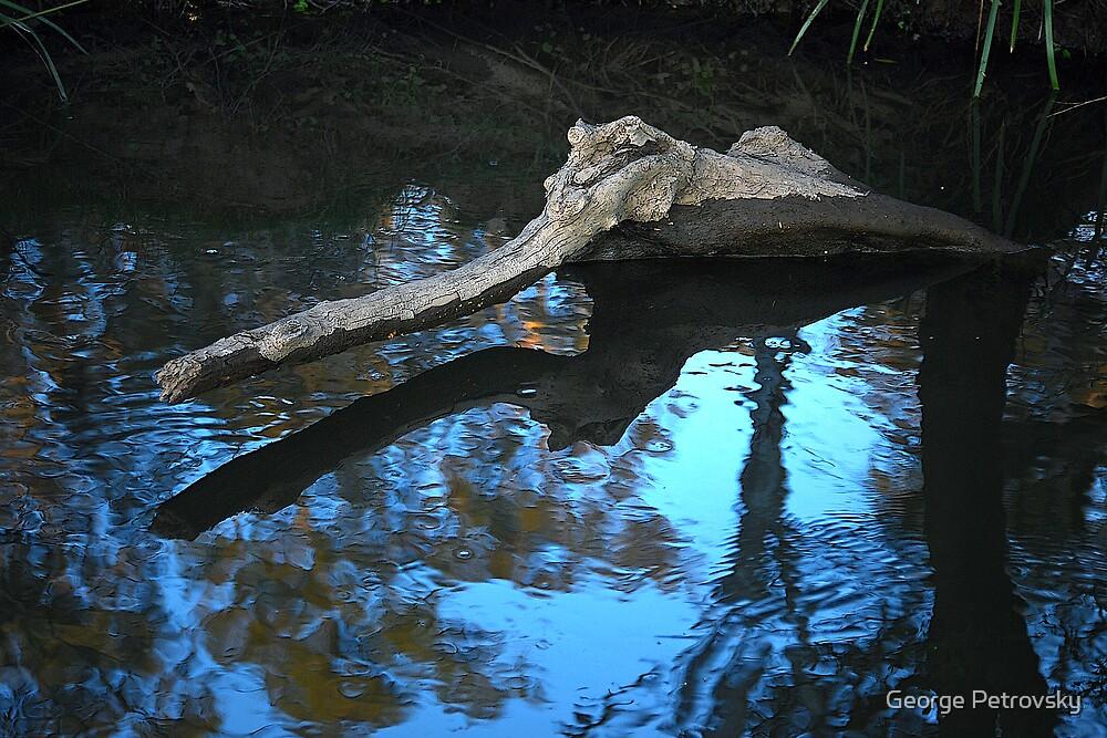 Cattai Creek Croc by George Petrovsky