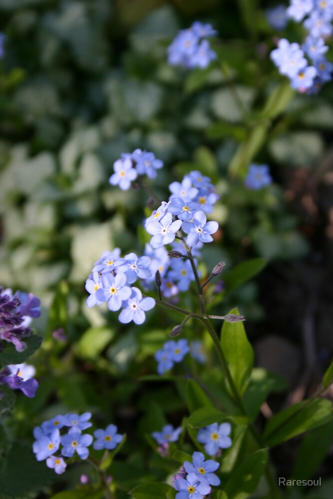 Blue Flowers by Raresoul