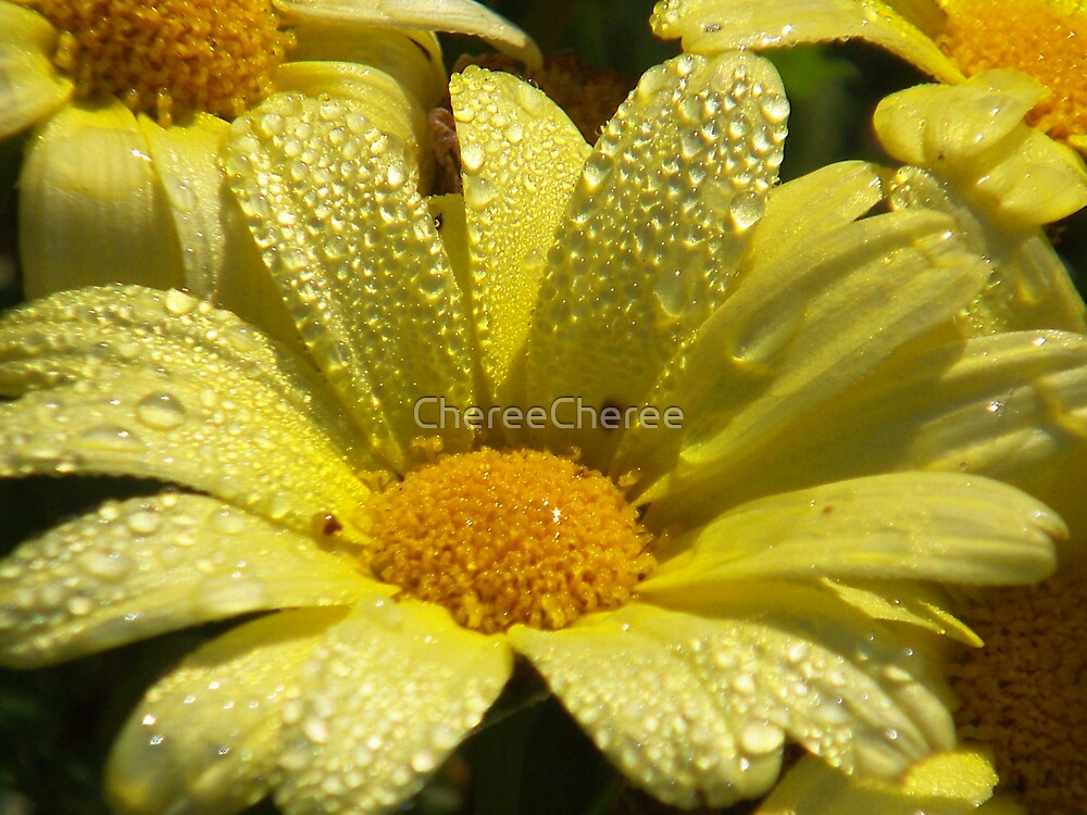 Morning Dew by ChereeCheree