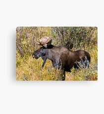 Like My Goatee? Canvas Print