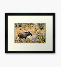 The Moose Is Loose Framed Print