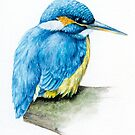 River Kingfisher watercolor  by Sarah Trett
