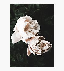 Two Flowers Photographic Print