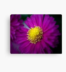 Aster Light Canvas Print