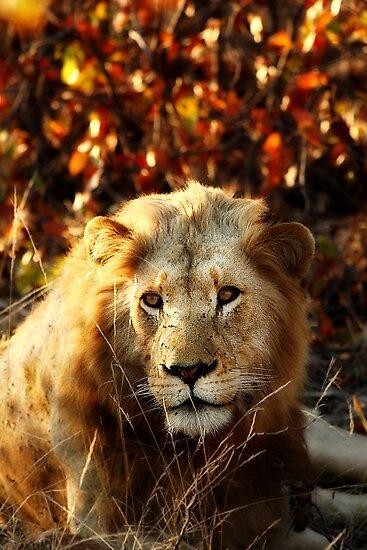 Kruger National Park, South Africa. 2009 I by Damienne Bingham