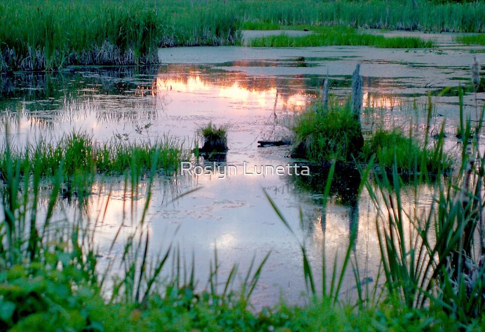 mountain swamp reflection by Roslyn Lunetta