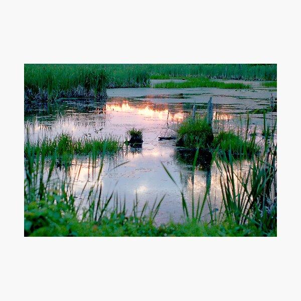mountain swamp reflection Photographic Print