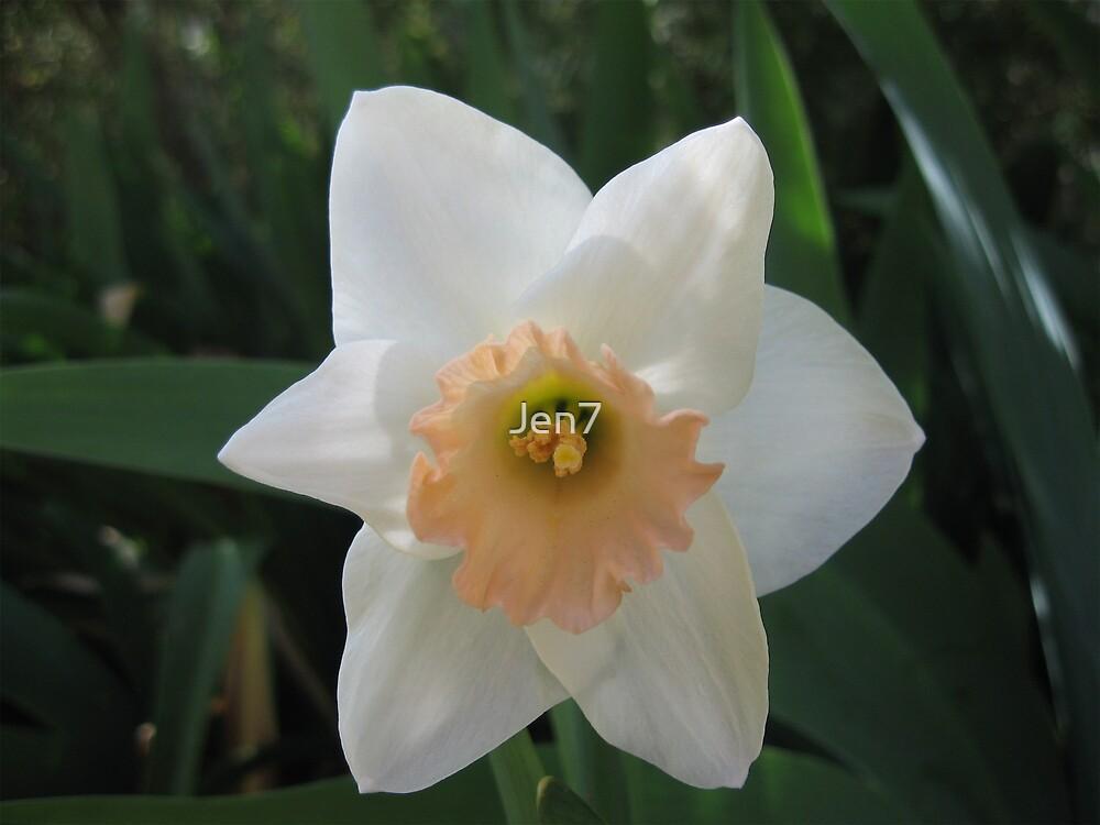 Daffodil by Jen7