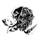 Cocker in Black and White by Dave  Knowles