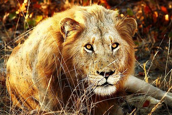 Kruger National Park, South Africa. 2009 II by Damienne Bingham