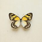 Golden Delias Butterfly by Alyson Fennell