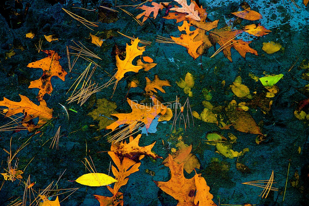 Leaves on a Lake by Ray4cam