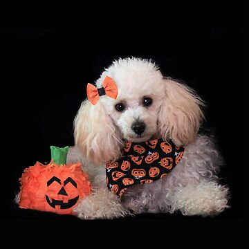 Halloween Toy Poodle  by ritmoboxers