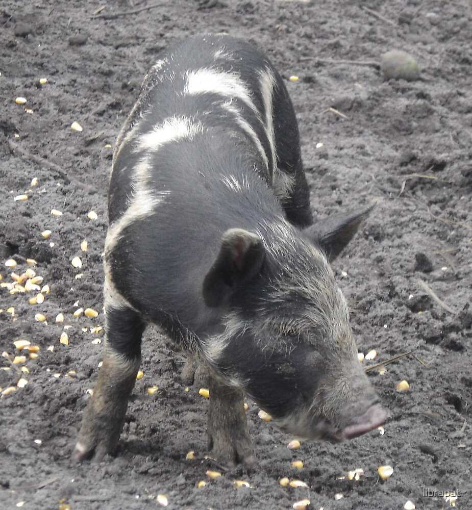 Hungry Baby Wild Hog by librapat