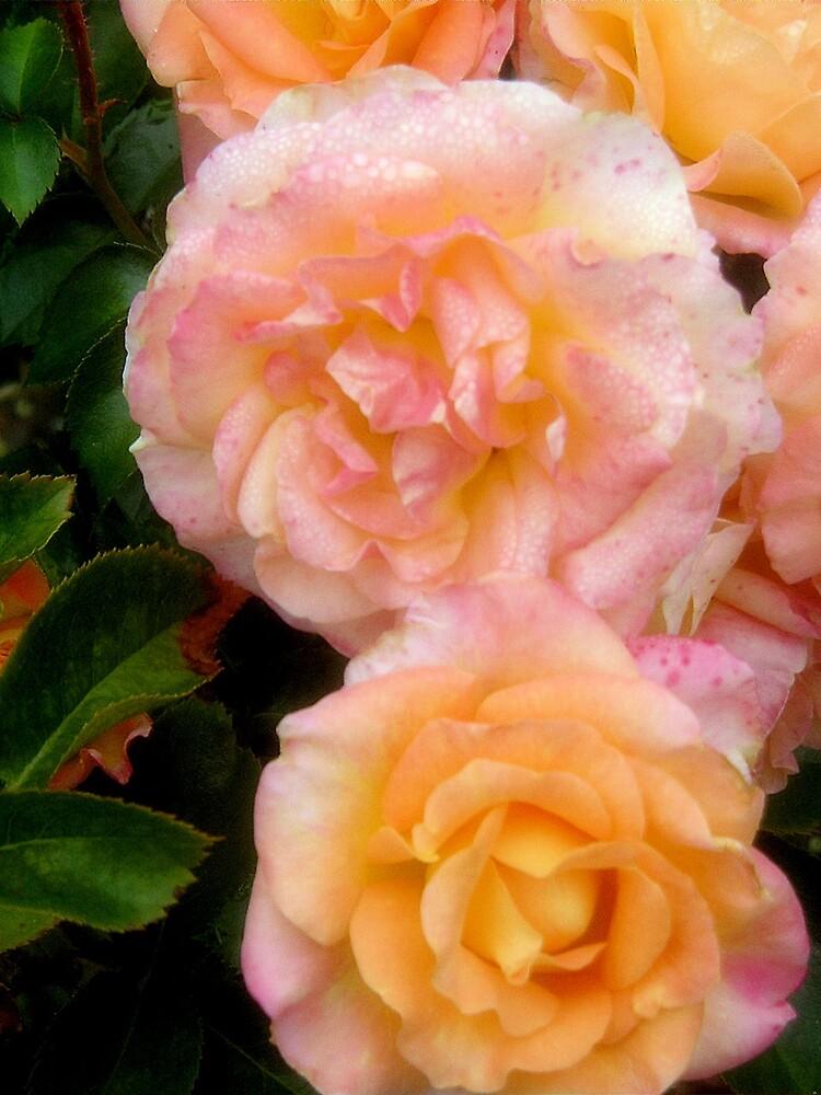 Roses by Erika Benoit