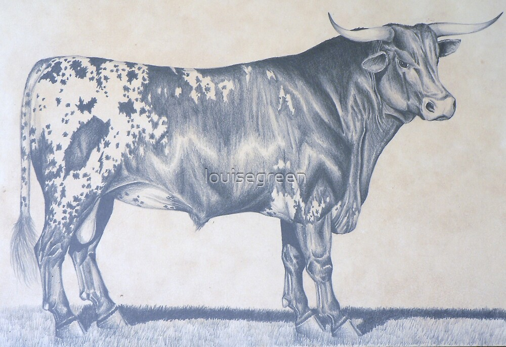 "Early Work - ""Texas Longhorn Bull"" by louisegreen"
