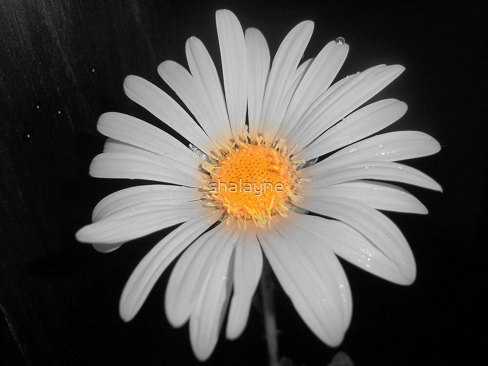 White Flower by shalayne