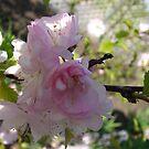 Double Flowering Plum Blossom by Diane Petker