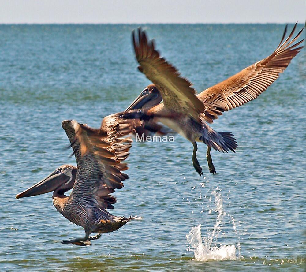 Pelican Take-Off by Memaa
