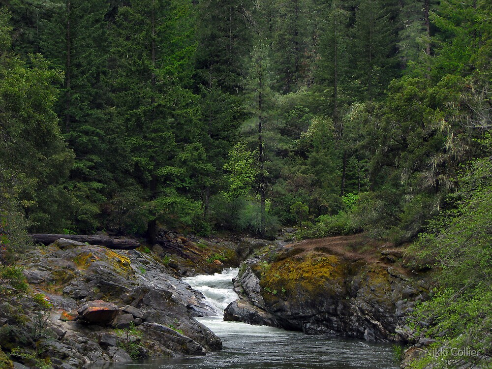 Oregon by Nikki Collier
