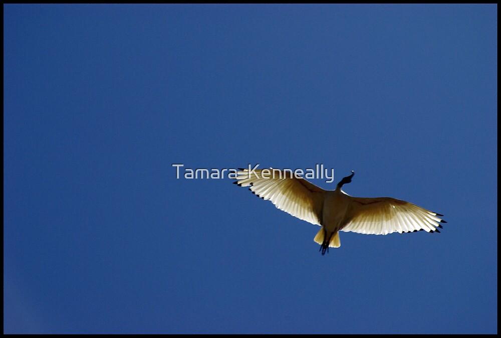 Flight by Tamara  Kenneally