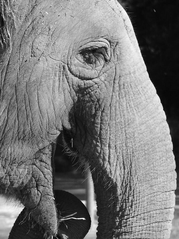 Elephant Feeding by Tim Everding