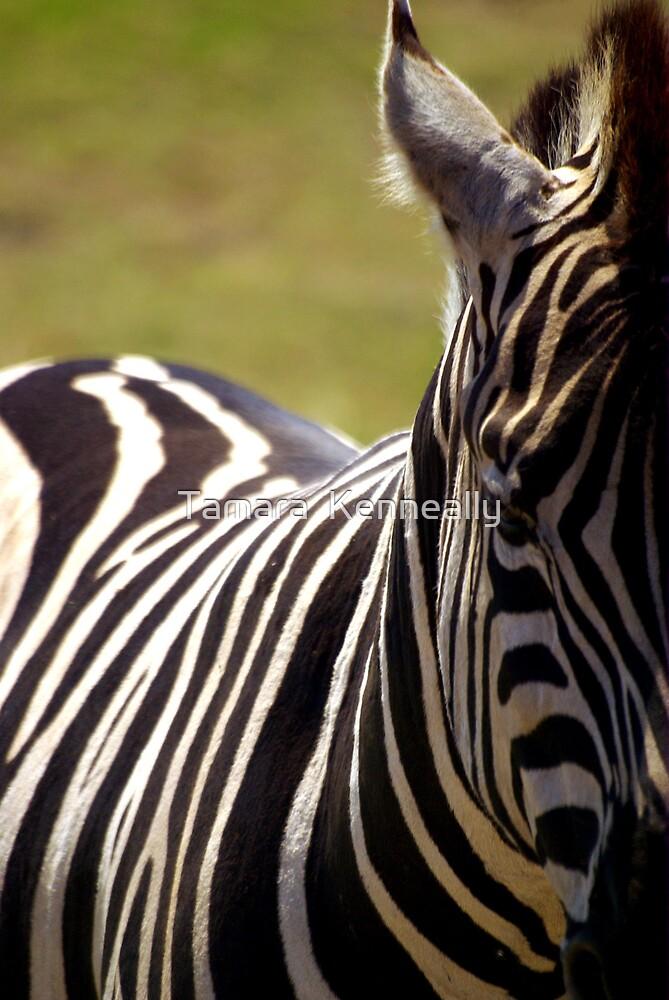 Zebra by Tamara  Kenneally