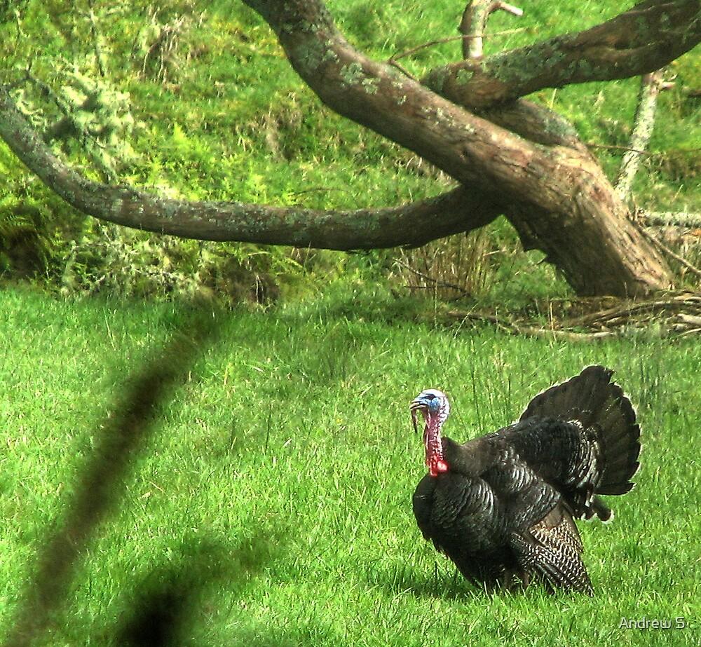 Wild Turkey Anybody by Andrew S