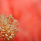 Simply Peachy! by Kim Roper