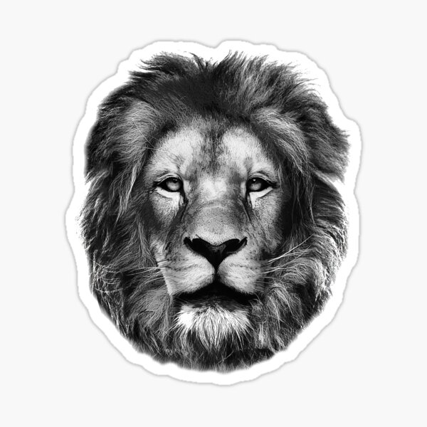 Lion Drawing  Sticker