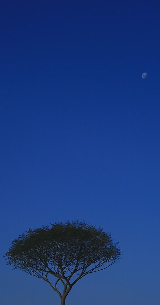 skyline by lylewetherston