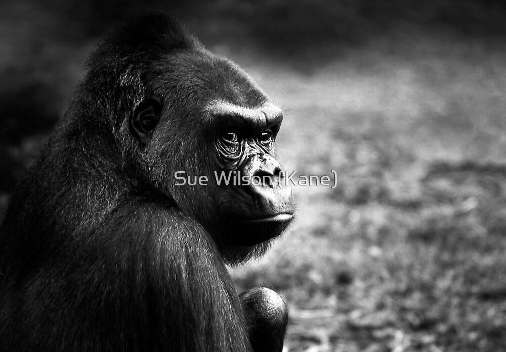 Grumpy by Sue Wilson (Kane)