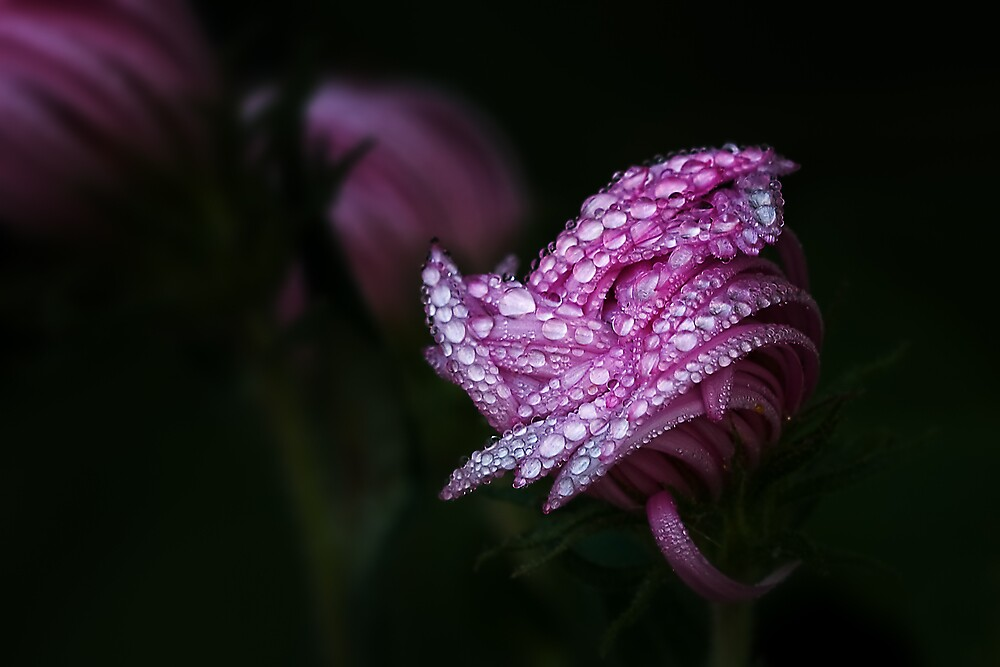 Morning Dew by Margaret Barry