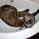 Cat in the sink. by James Gibbs