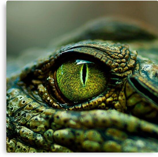 Eye of the Crocodile [iPad / Phone cases / Prints / Decor] by Didi Bingham
