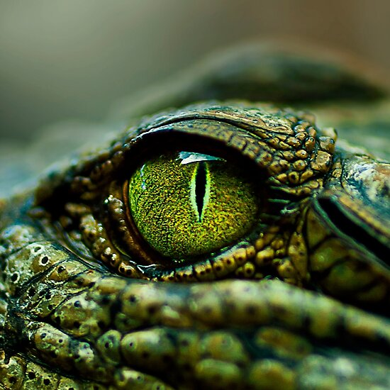 Eye of the Crocodile [iPad / Phone cases / Prints / Decor] by Didi Bingham