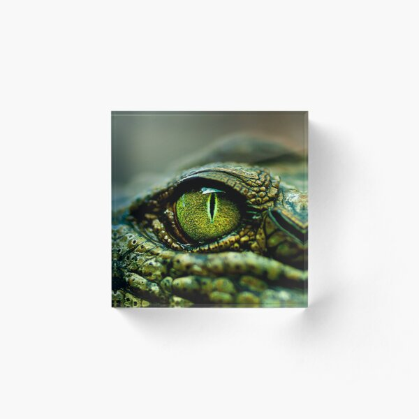 Eye of the Crocodile [iPad / Phone cases / Prints / Decor] Acrylic Block