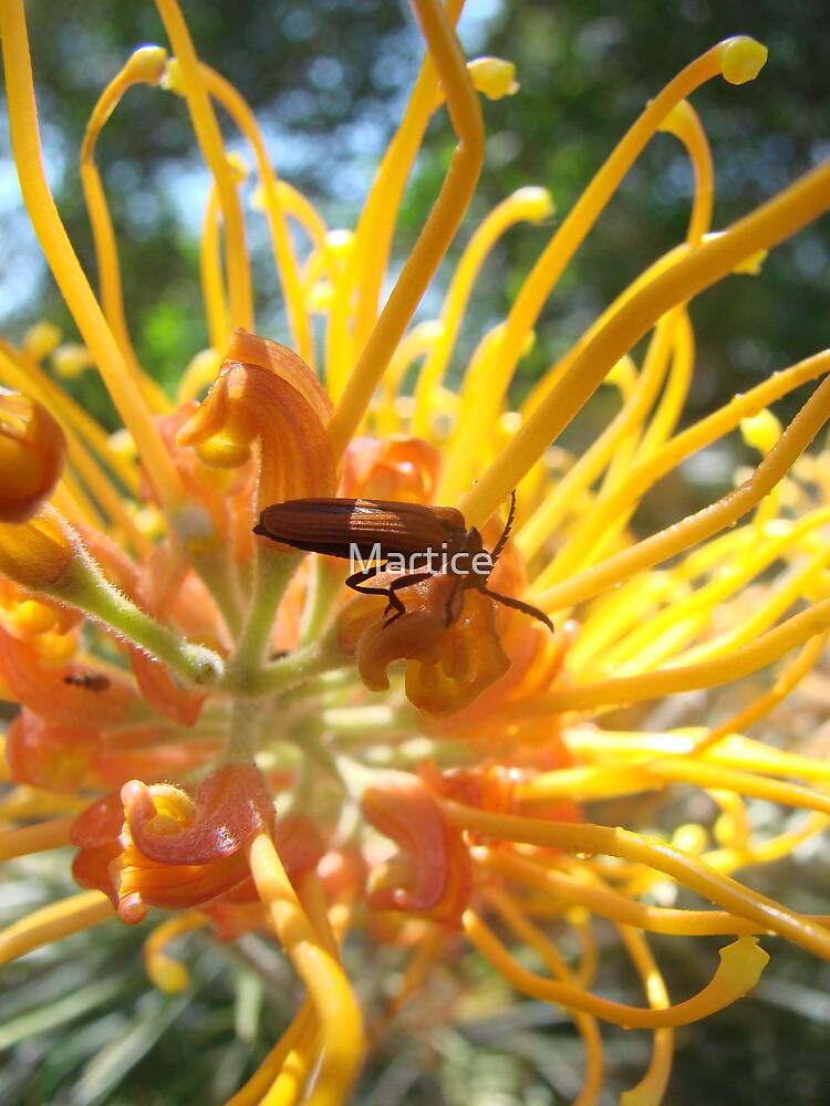 Bright Bug by Martice