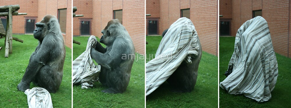 Silverback Gorilla Taking Cover by amjaywed