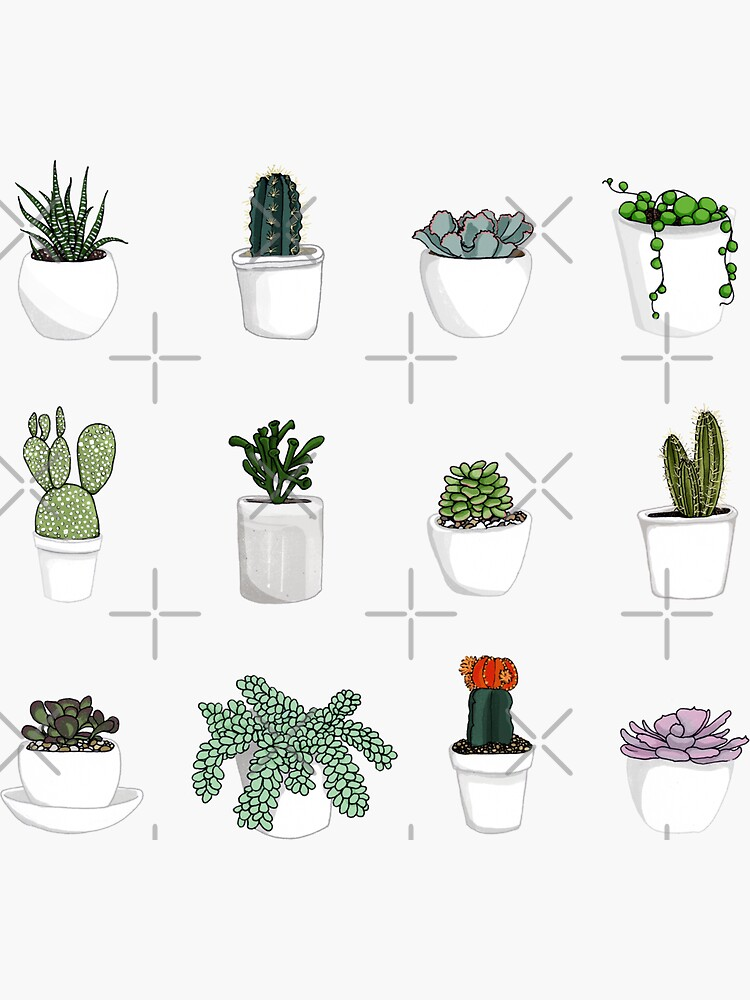 Succulents 2 by katherineblower