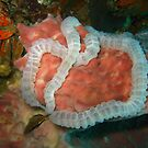 Intestines under the Sea by Christopher Hamilton Lansell