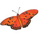 Gulf Fritillary Butterfly by amydaggett