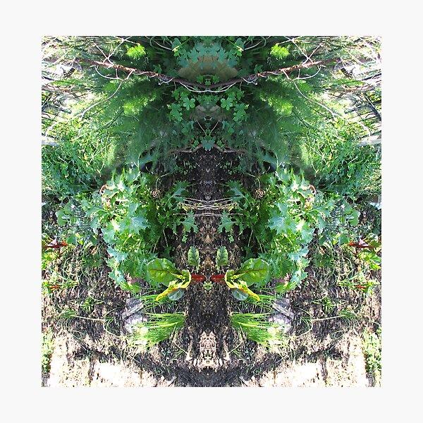 Northcote Community Gardens Fantasy 3 Photographic Print